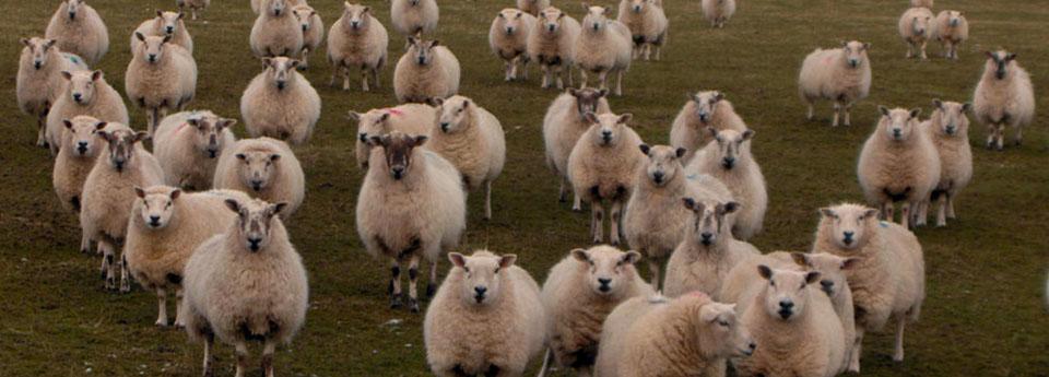 Slide-loonbedrijf-nieboer-schapenhouderij